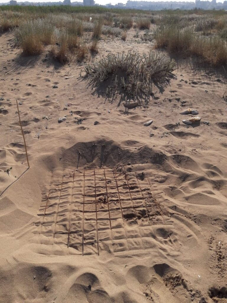 Caretta caretta tracks at Tyre Coast Nature Reserve, June 2020_2
