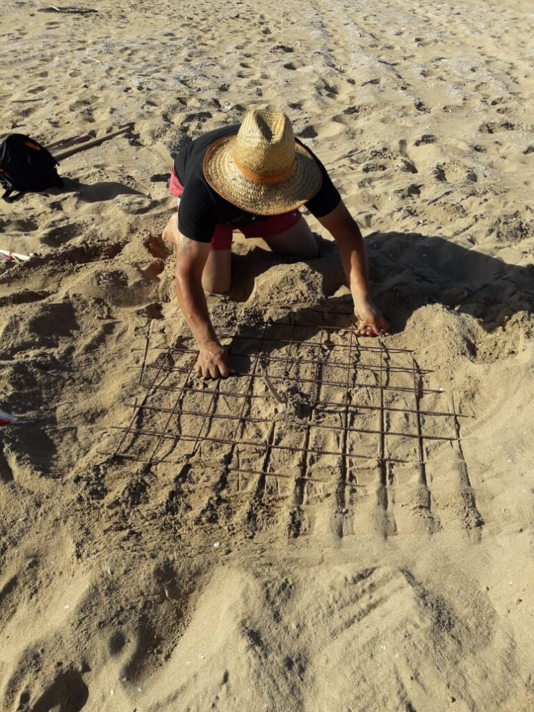 Nest of Caretta Caretta at Tyte Coast Nature Reserve, June 2020_5