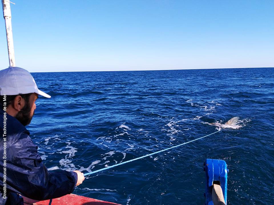 Monitoring activities on Monastir Bay 9 - December 2020