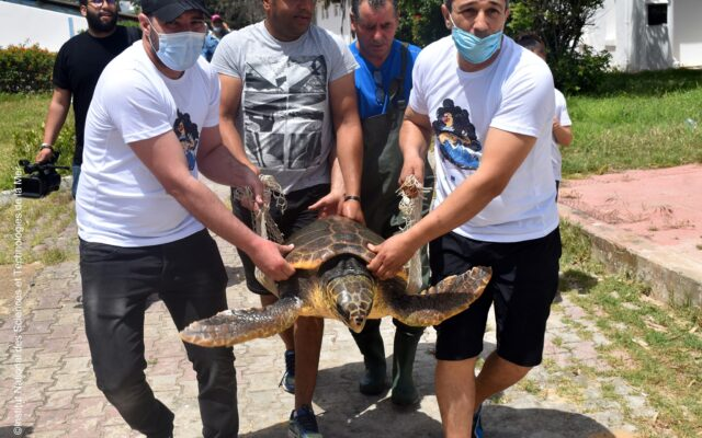 World Turtle Day2021_INSTM2